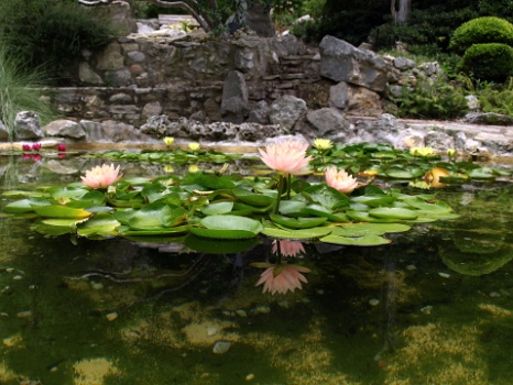 Stepping Stones In The Koi Pond
